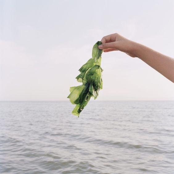 Японские водоросли
