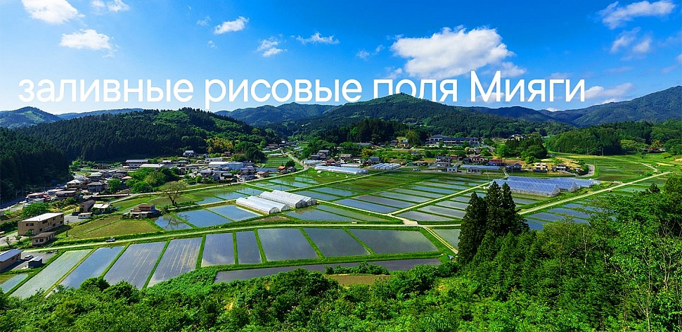 запливные рисовые поля Мияги